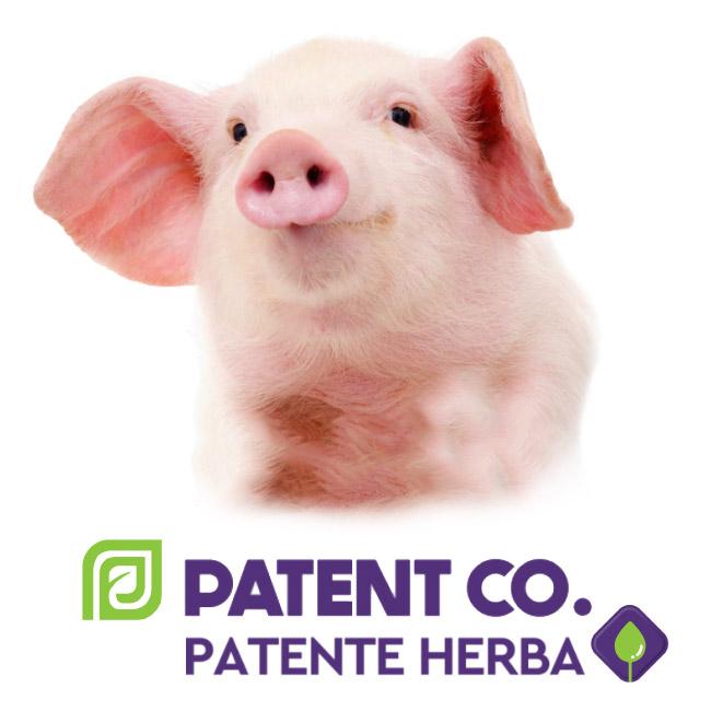 Лечение ЖКТ Патенте Херба
