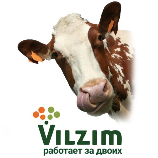 Ферментные препараты Вилзим