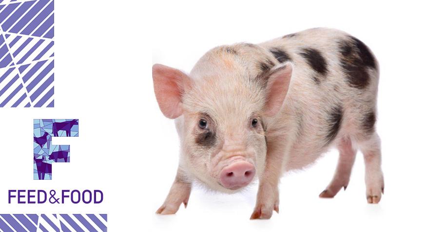 Витаминно-минеральные добавки для свиней