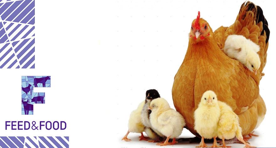 Кормовые добавки для птиц