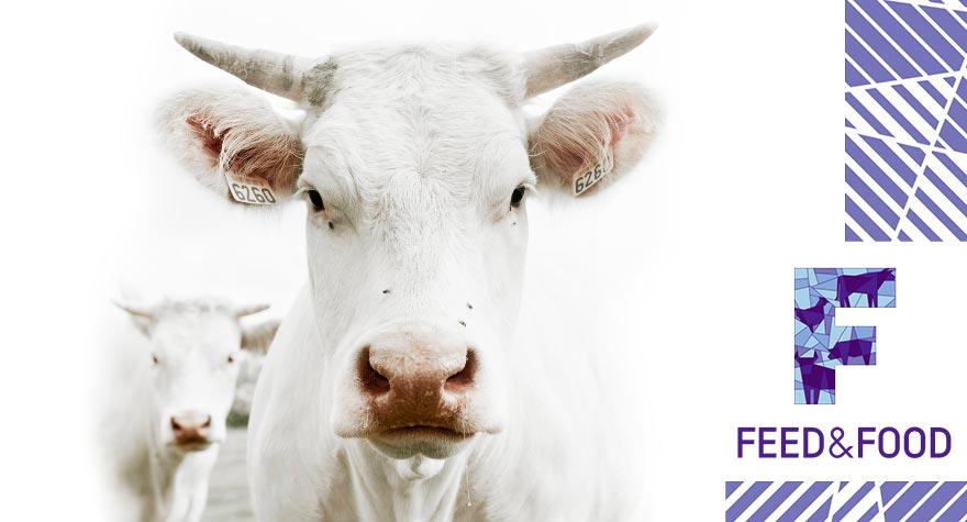 Кормовые добавки для сухостойных коров
