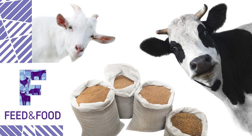 Чем полезны кормовые добавки для крс