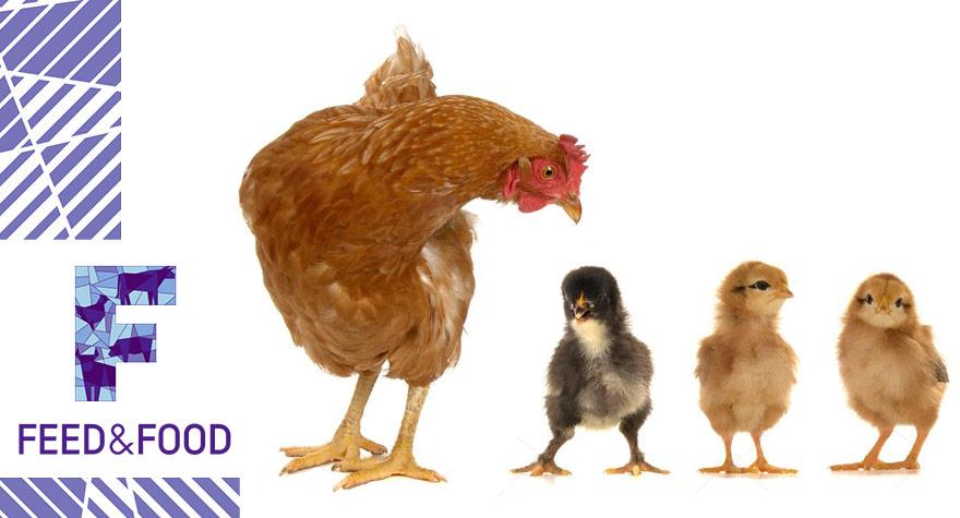 Ферментные препараты для птиц